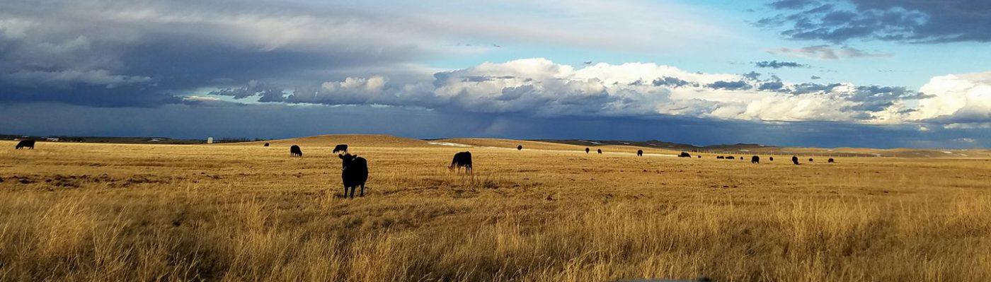 Lost Creek Cattle Company